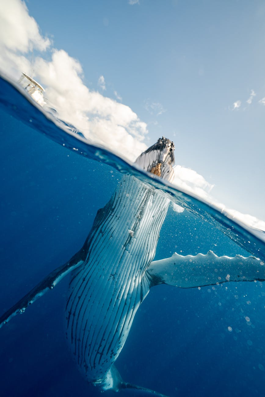 Ever been Swallowed by a Whale?